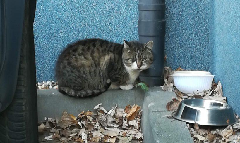Jak zrobić prosty domek na zimę dla kotów – instrukcja z www