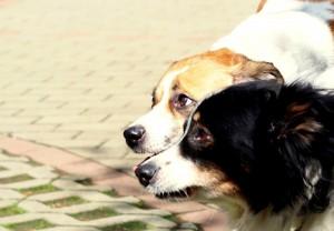 PSY MAJĄ DOM: Perełka i Zuzia. Nieszczęsny psi dramat gdy odchodzi najbliższy
