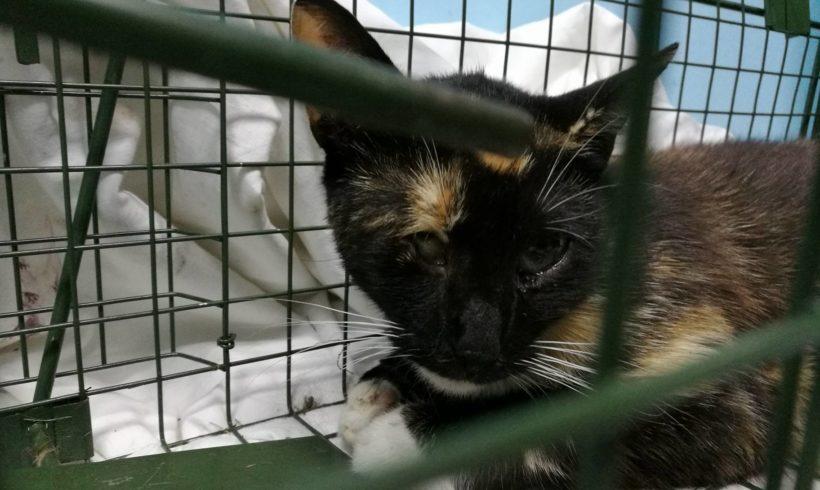 kotka Włóczka – wolna od problemów