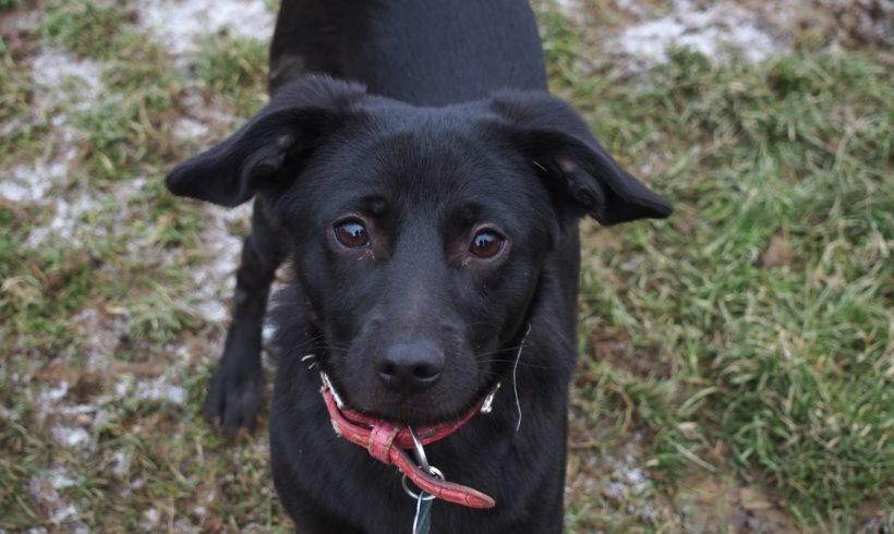 MA DOM: Kuba gotowy do adopcji! Czeka na wymarzony dom :)