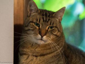 KOT MA DOM: Sobieski. Nieśmiałe kocie serce czeka na DOM …