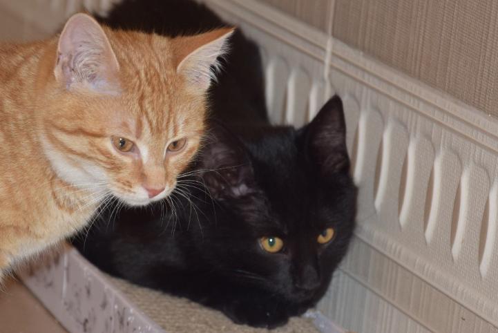 MA DOM: Oliwka i Bohun – kocie rodzeństwo do pokochania w dwupaku !