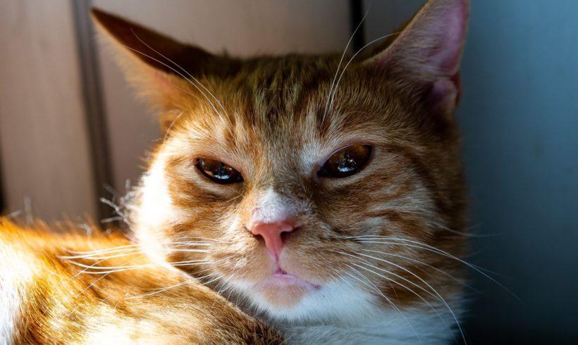 KOT MA DOM: Bursztynek. Czy te oczy mogą zauroczyć ? Czemu nie ! :)