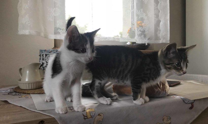 KOTY MAJĄ DOM: Bounty i Twix – słodki duet szuka domu !