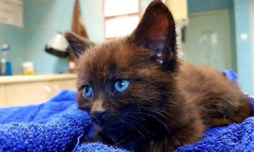 KOT MA DOM: Tuż po piątku, trzynastego … nie zgubił ktoś kotka ? Czarnego ? …