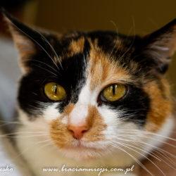 KOT MA DOM: Łatka/Ofelia/Lila – bezdomna kotka z parku