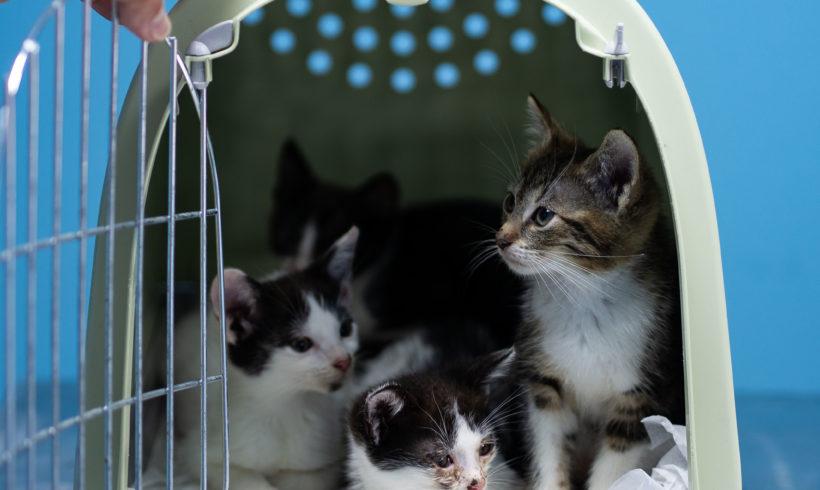 Sterylizacja kotów właścicielskich / domki zimowe dla kotów wolno żyjących