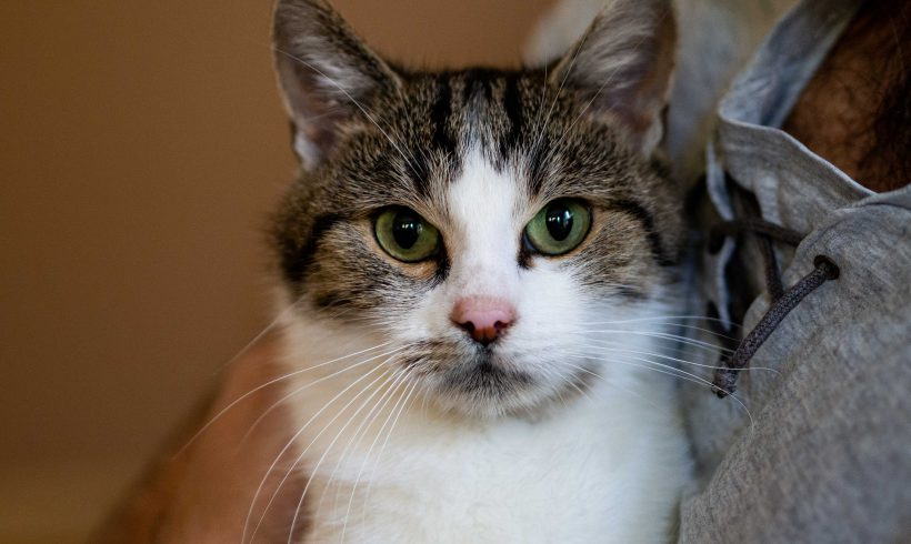 KOTKA MA DOM: Figa. Łagodna, porzucona koteczka, którą zdążył bardzo doświadczyć los