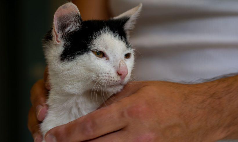 KOT MA DOM: Radomir …Weź nie pytaj, weź się przytul… Najprzytulniejszy koteł
