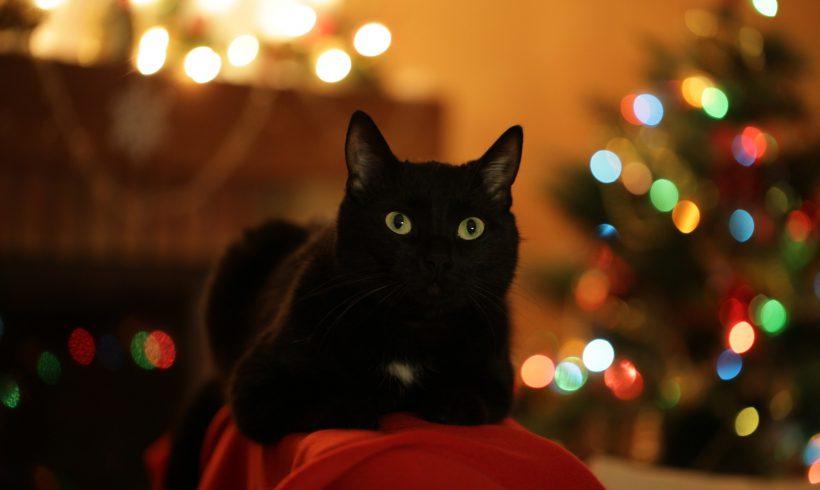 KOTKA ODZYSKAŁA DOM: Zimowa czarna kotka Mila