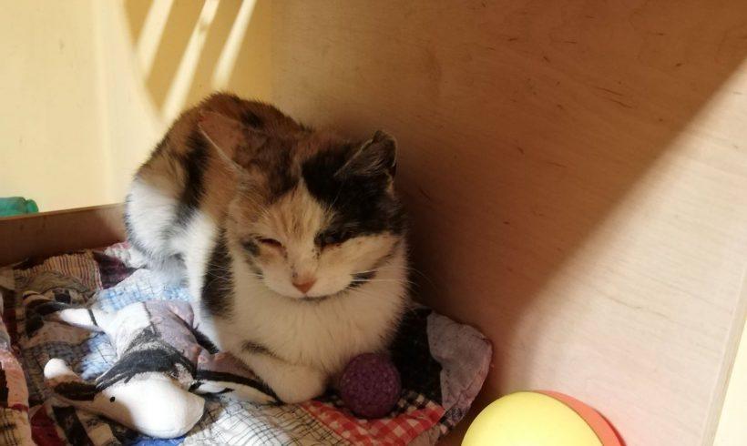 KOTKA MA DOM: Pralinka, kotka tak słodka jak samo imię -prosi o pomoc !
