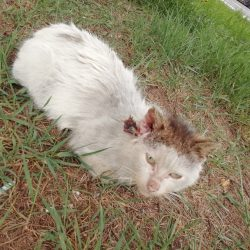 Czechowice-Dziedzice : poraniony kot, potrzebna pomoc w odłowieniu
