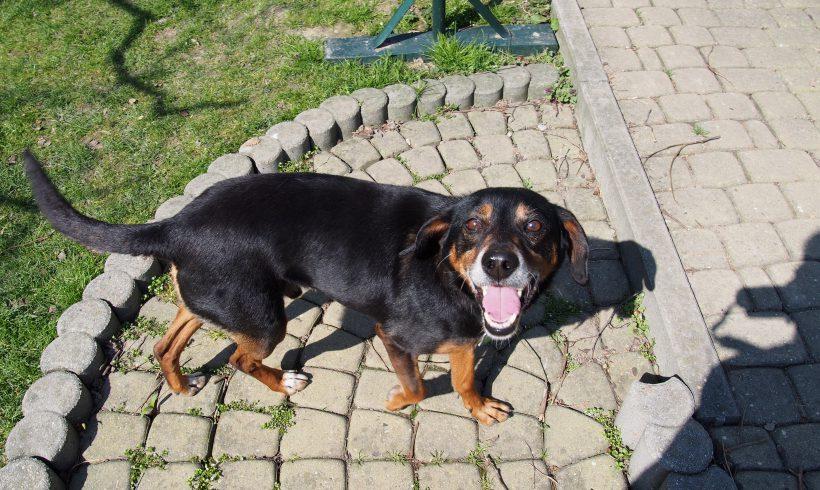 PIES MA DOM: Lovelas  – pies do (za)kochania