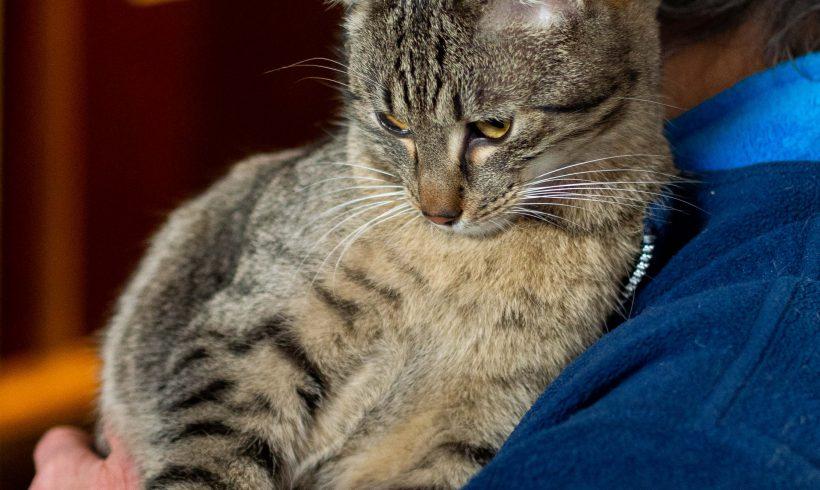 KOT MA DOM: Warkotek, kocie mruczadło i milaczek polecamy do adopcji :)
