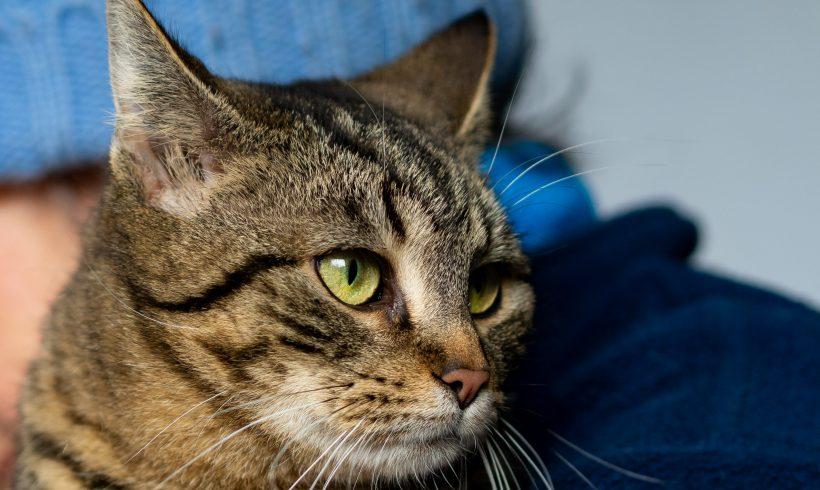 KOTKA MA DOM: Prześliczna Ptaszka – najmilszy kot na świecie szuka domu