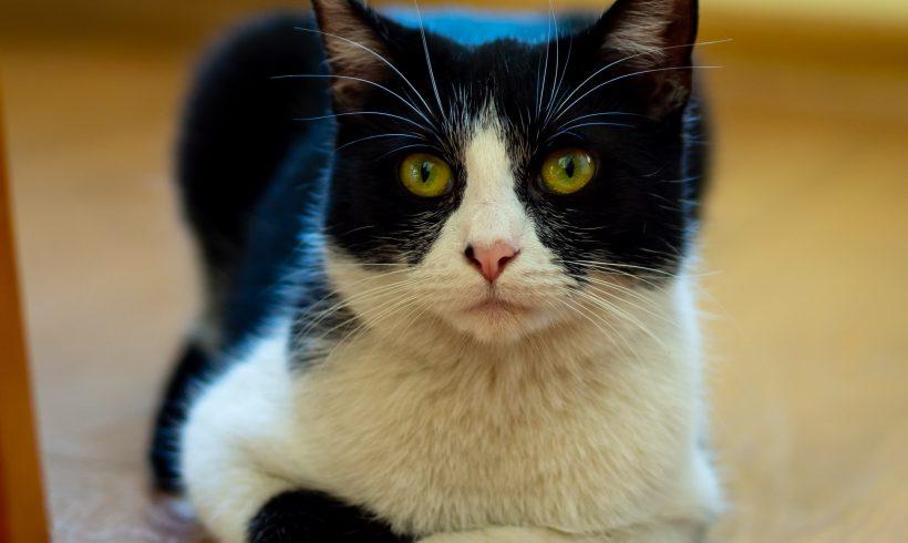 KOTKI MAJĄ DOM: Lulusia i Mruczusia – dwie uratowane koteczki szukają dobrego domu