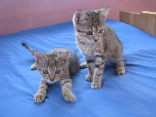 KOTY MAJĄ DOM: Dwie kocie rakiety do adopcji ;)