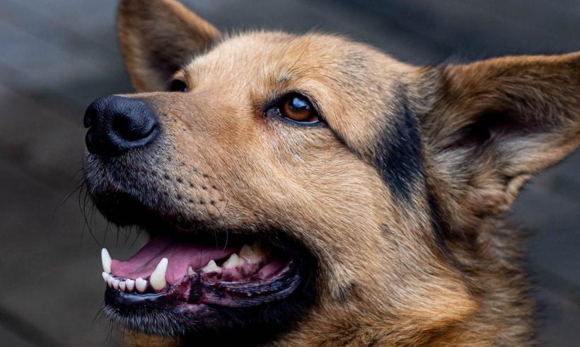 PIES MA DOM: Kokos- pies łańcuchowy. Pieskie życie pięknego psa…