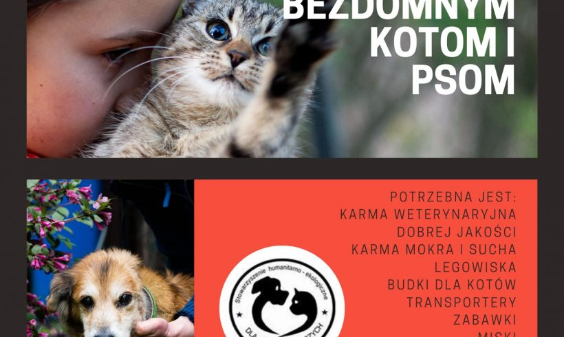 Zbiórka karmy i akcesoriów dla bezdomnych kotów i psów